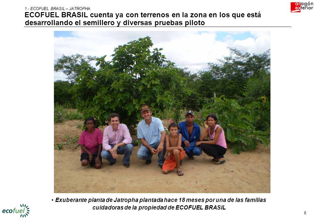 8 1.- ECOFUEL BRASIL – JATROPHA ECOFUEL BRASIL cuenta ya con terrenos en la zona en los que está desarrollando el semillero y diversas pruebas piloto Exuberante planta de Jatropha plantada hace 18 meses por una de las familias cuidadoras de la propiedad de ECOFUEL BRASIL
