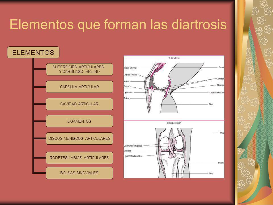 Movimientos posibles de las diartrosis.