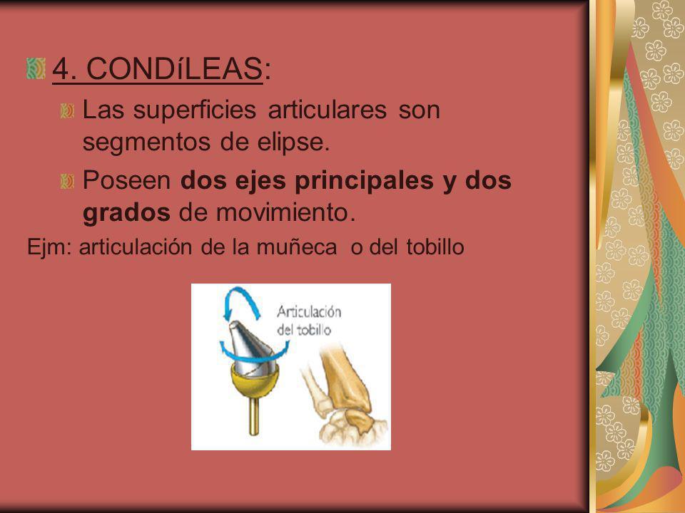 4. CONDíLEAS: Las superficies articulares son segmentos de elipse. Poseen dos ejes principales y dos grados de movimiento. Ejm: articulación de la muñ