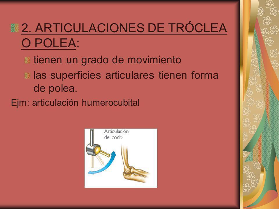 2. ARTICULACIONES DE TRÓCLEA O POLEA: tienen un grado de movimiento las superficies articulares tienen forma de polea. Ejm: articulación humerocubital