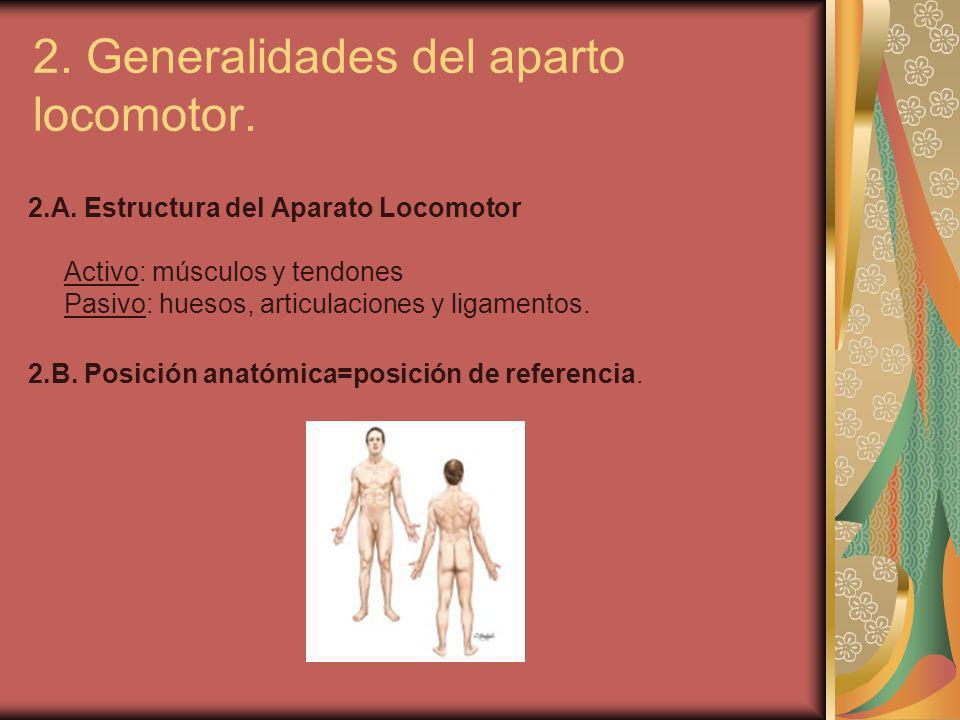 2. Generalidades del aparto locomotor. 2.A. Estructura del Aparato Locomotor Activo: músculos y tendones Pasivo: huesos, articulaciones y ligamentos.