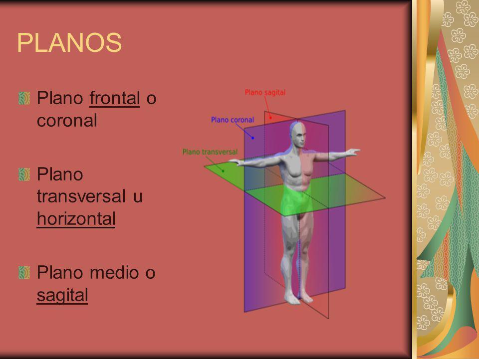 PLANOS Plano frontal o coronal Plano transversal u horizontal Plano medio o sagital