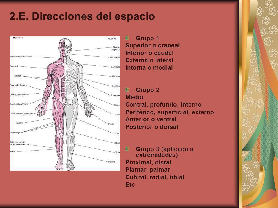 3.Generalidades de la osteología 3.A. Función Proteger órganos, envolviéndolos y preservándolos.