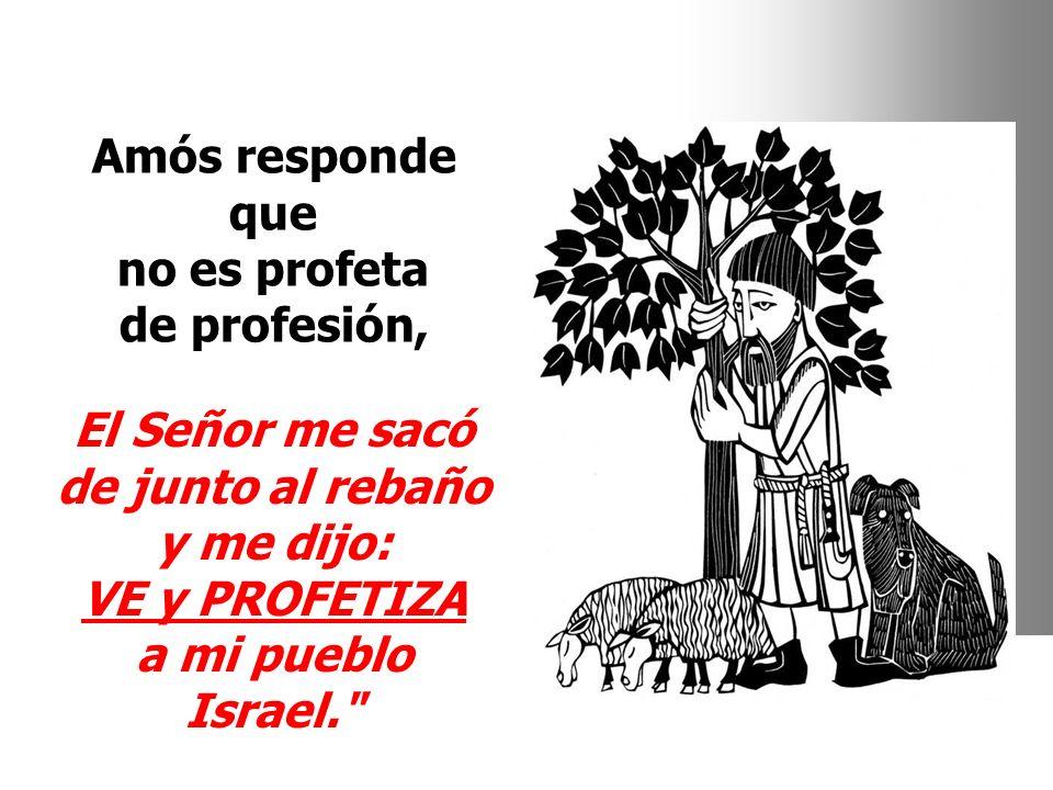 Amós responde que no es profeta de profesión, El Señor me sacó de junto al rebaño y me dijo: VE y PROFETIZA a mi pueblo Israel.