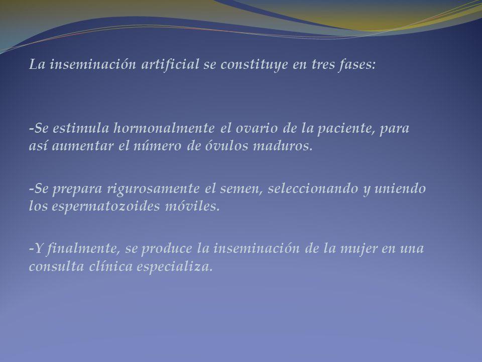 La inseminación artificial se constituye en tres fases: -Se estimula hormonalmente el ovario de la paciente, para así aumentar el número de óvulos mad