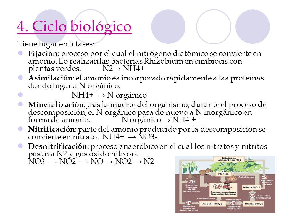 4. Ciclo biológico Tiene lugar en 5 fases: Fijación : proceso por el cual el nitrógeno diatómico se convierte en amonio. Lo realizan las bacterias Rhi