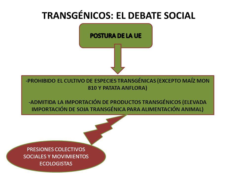 TRANSGÉNICOS: EL DEBATE SOCIAL -PROHIBIDO EL CULTIVO DE ESPECIES TRANSGÉNICAS (EXCEPTO MAÍZ MON 810 Y PATATA ANFLORA) -ADMITIDA LA IMPORTACIÓN DE PROD