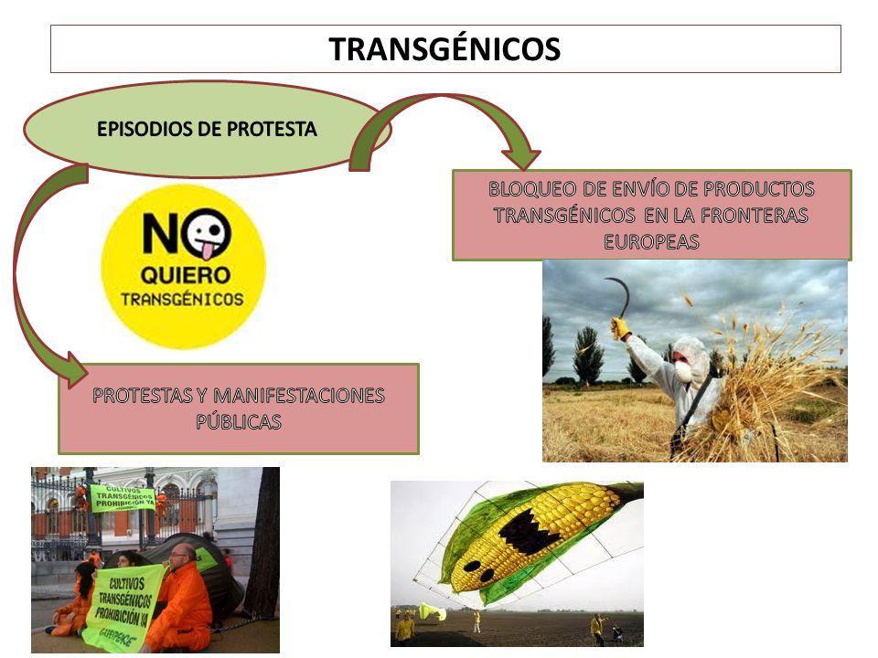 TRANSGÉNICOS: POSTURAS A FAVOR Y EN CONTRA PRINCIAPLES COLECTIVOS Y ASOCIACIONES AGRARIAS DE LA UE EN CONTRA DE LOS CULTIVOS TRANSGÉNICOS POSIBLE PÉRDIDA DE LOS MODELOS DE PRODUCCIÓN TRADICIONAL AUMENTO ESPECTACULAR DE LOS BENEFICIOS DE LA GRANDES EMPRESAS MULTINACIONALES Fuente de rentabilidad para el sector empresarial y no para el sector productor.