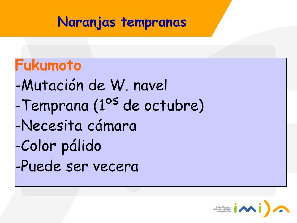 Naranjas tempranas Fukumoto -Mutación de W. navel -Temprana (1º s de octubre) -Necesita cámara -Color pálido -Puede ser vecera