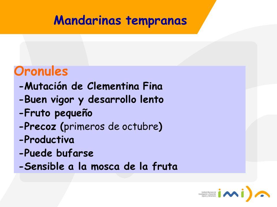 Mandarinas tempranas Oronules -Mutación de Clementina Fina -Buen vigor y desarrollo lento -Fruto pequeño -Precoz (primeros de octubre) -Productiva -Pu