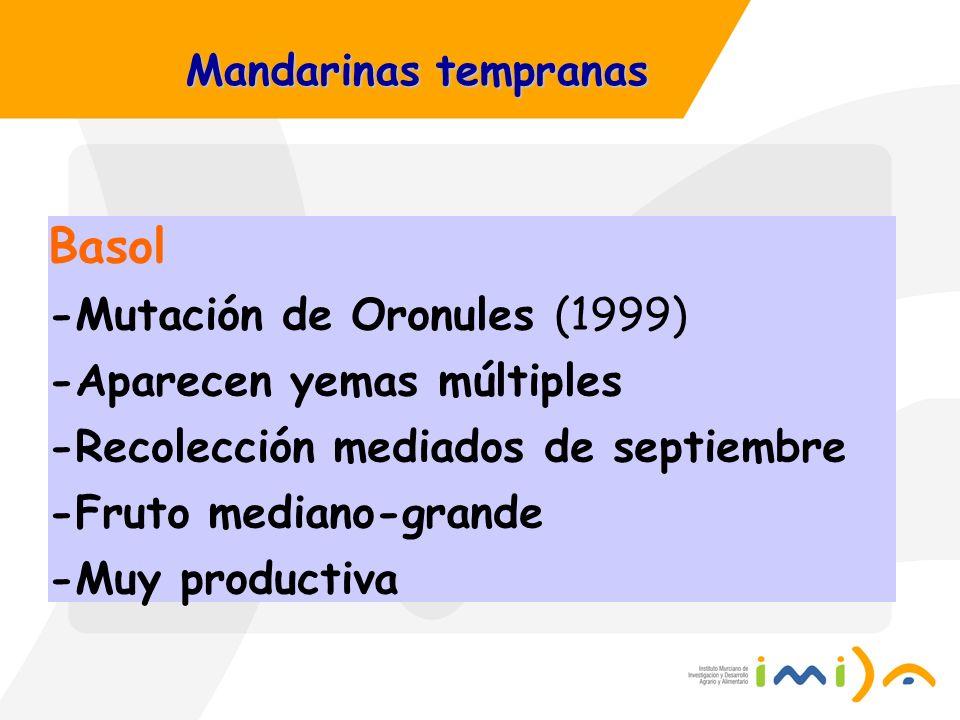 Mandarinas tempranas Basol -Mutación de Oronules (1999) -Aparecen yemas múltiples -Recolección mediados de septiembre -Fruto mediano-grande -Muy produ