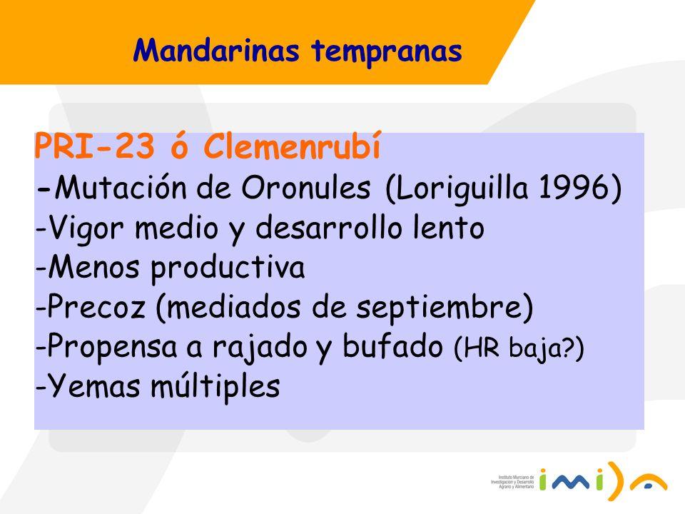 Mandarinas tempranas PRI-23 ó Clemenrubí -Mutación de Oronules (Loriguilla 1996) -Vigor medio y desarrollo lento -Menos productiva -Precoz (mediados d