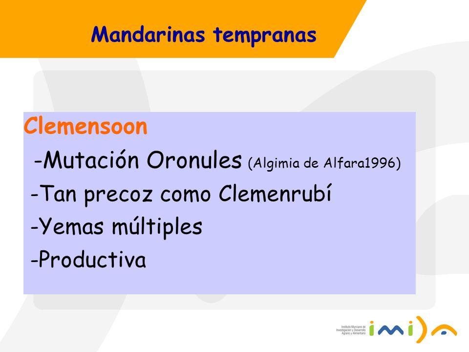 Mandarinas tempranas Clemensoon -Mutación Oronules (Algimia de Alfara1996) -Tan precoz como Clemenrubí -Yemas múltiples -Productiva