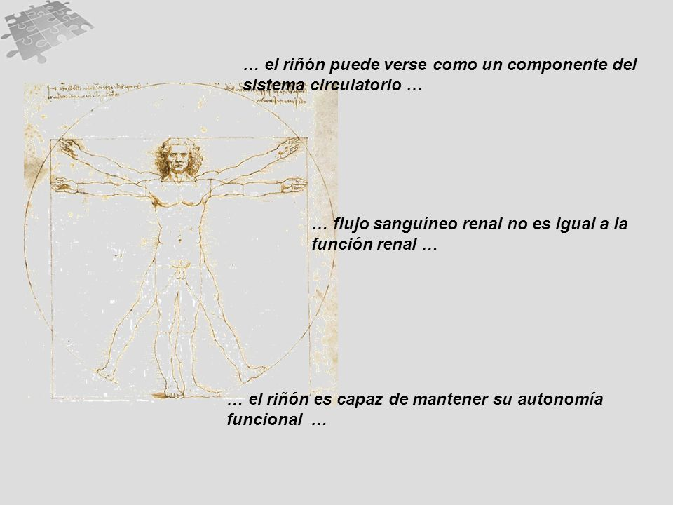 … flujo sanguíneo renal no es igual a la función renal … … el riñón es capaz de mantener su autonomía funcional … … el riñón puede verse como un componente del sistema circulatorio …