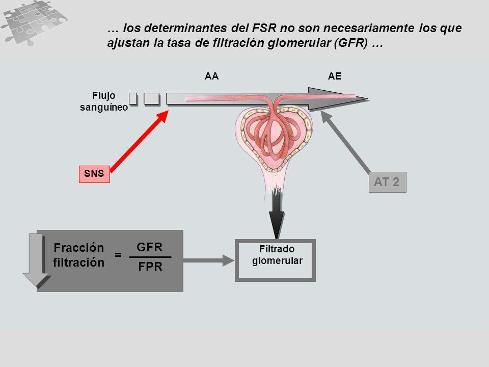 … los determinantes del FSR no son necesariamente los que ajustan la tasa de filtración glomerular (GFR) … Flujo sanguíneo AAAE Filtrado glomerular ANP PG AT 2 Fracción filtración GFR FPR = AAAE Flujo sanguíneo Filtrado glomerular SNS AT 2 Fracción filtración GFR FPR =