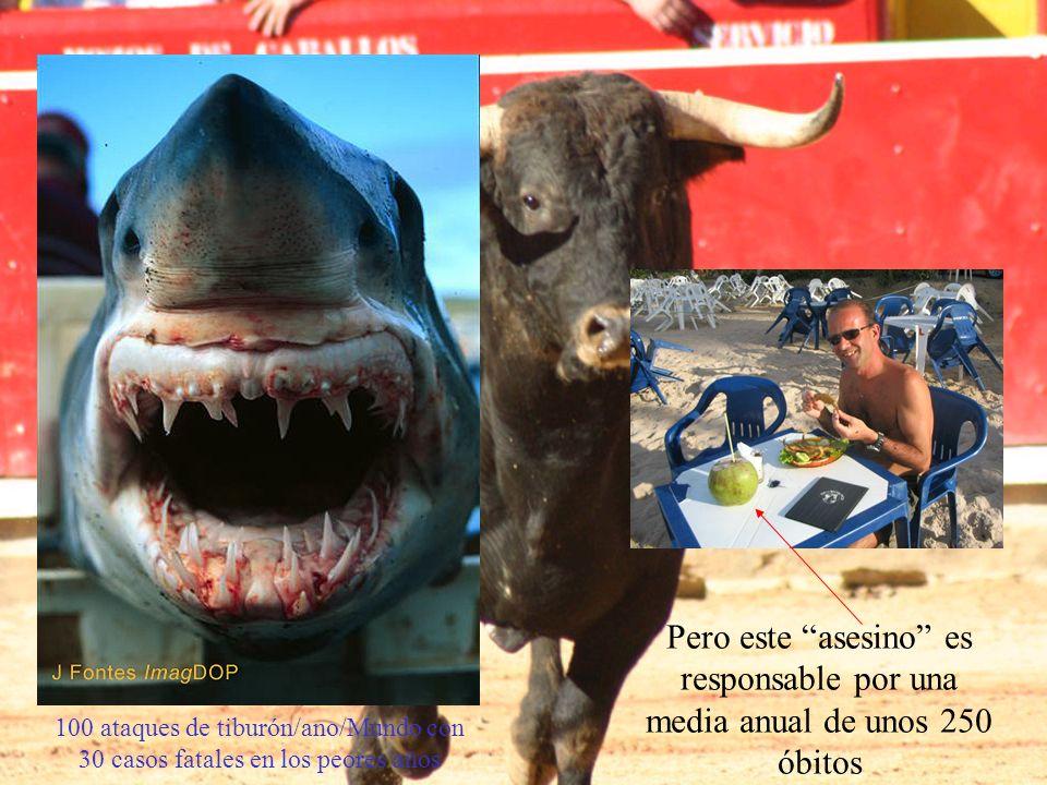 Xiphias gladius 100 ataques de tiburón/ano/Mundo con 30 casos fatales en los peores años Pero este asesino es responsable por una media anual de unos