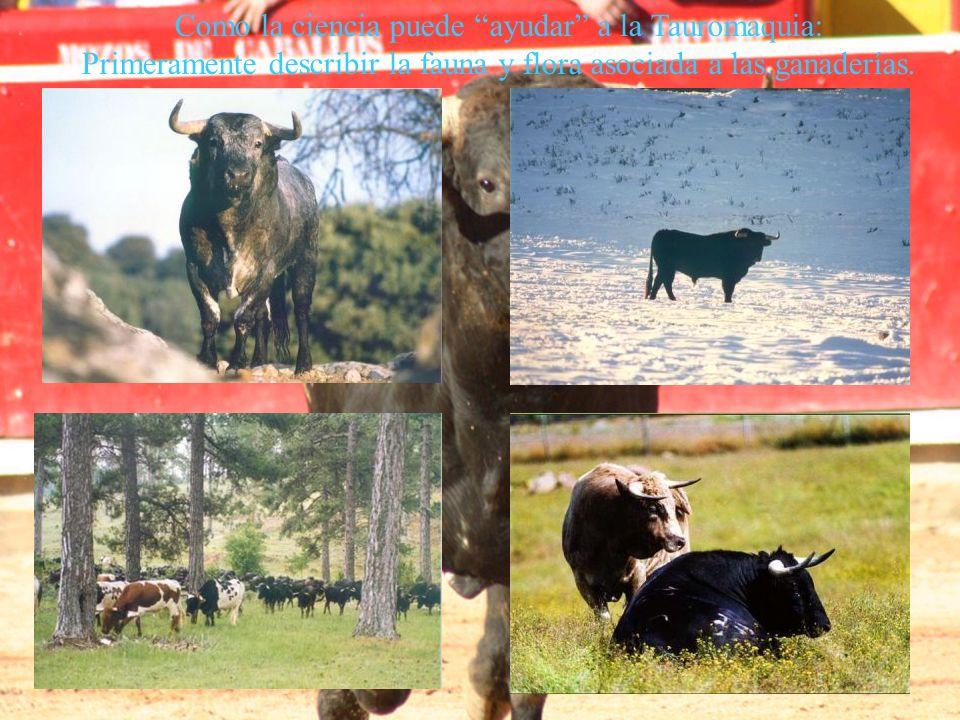 Xiphias gladius Como la ciencia puede ayudar a la Tauromaquia: Primeramente describir la fauna y flora asociada a las ganaderías.