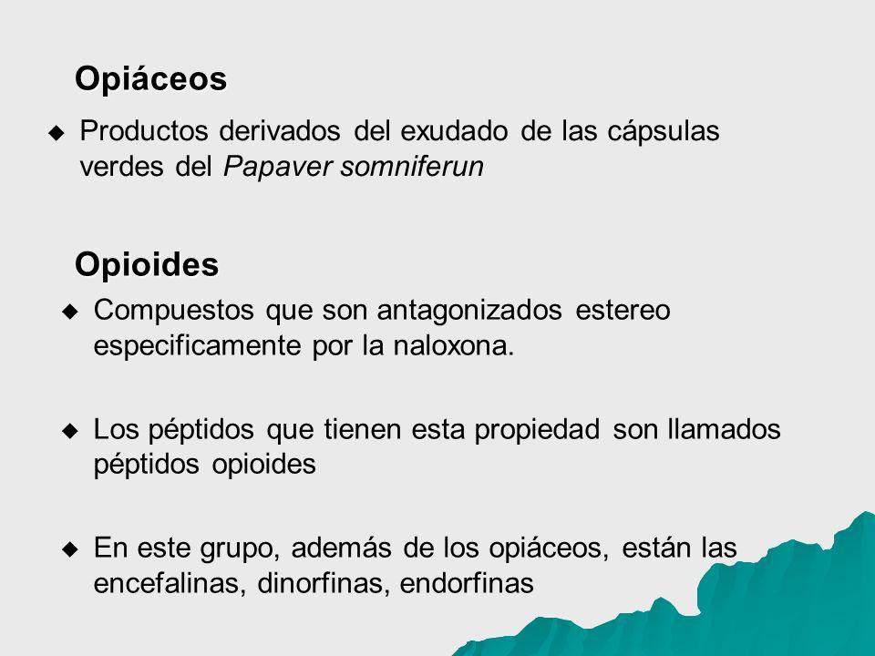 Productos derivados del exudado de las cápsulas verdes del Papaver somniferun Compuestos que son antagonizados estereo especificamente por la naloxona