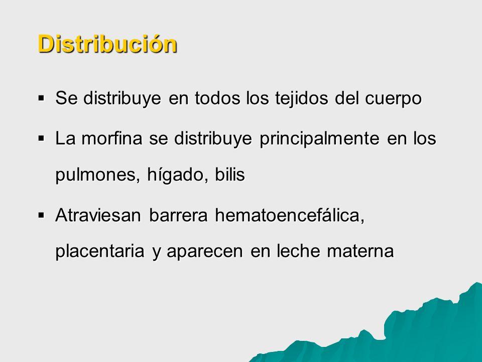 Se distribuye en todos los tejidos del cuerpo Se distribuye en todos los tejidos del cuerpo La morfina se distribuye principalmente en los pulmones, h