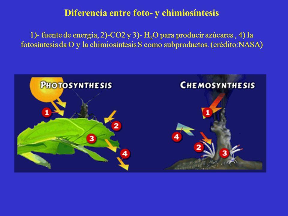 Diferencia entre foto- y chimiosíntesis 1)- fuente de energia, 2)-CO2 y 3)- H 2 O para producir azúcares, 4) la fotosíntesis da O y la chimiosíntesis S como subproductos.