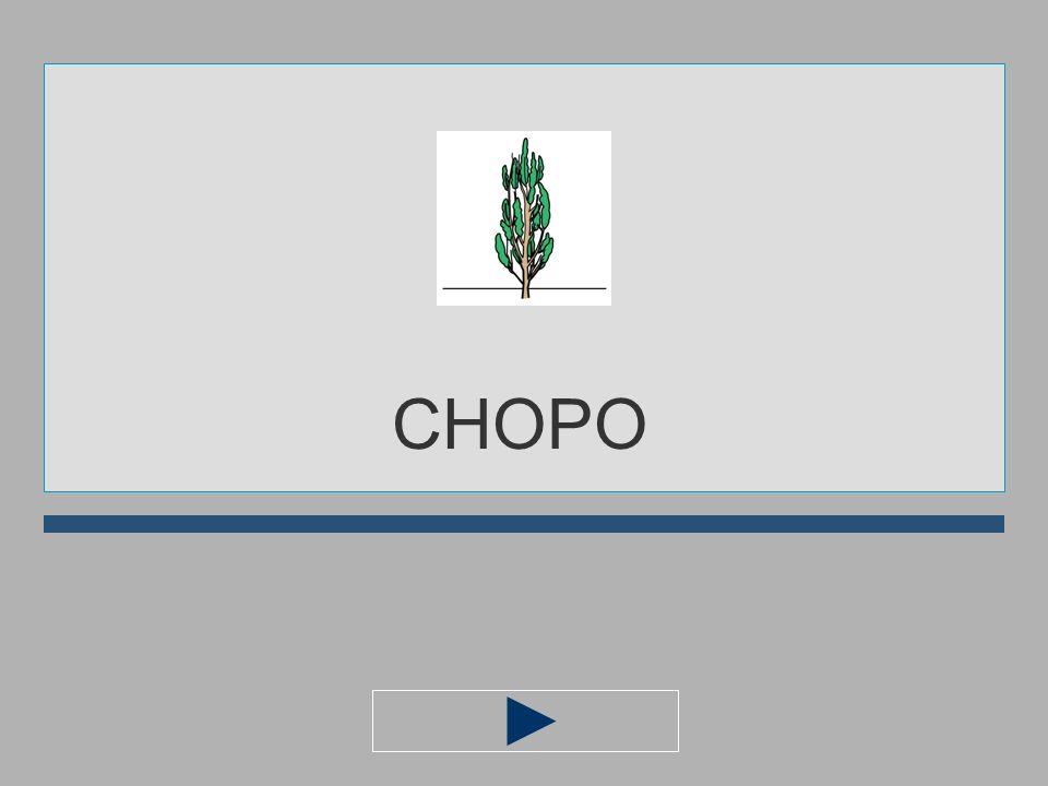 CH A O M P I CHOP... ?