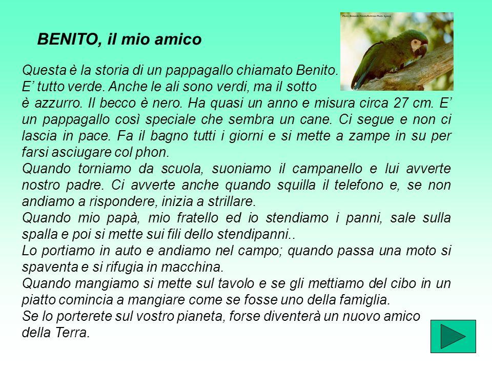 BENITO, il mio amico Questa è la storia di un pappagallo chiamato Benito.