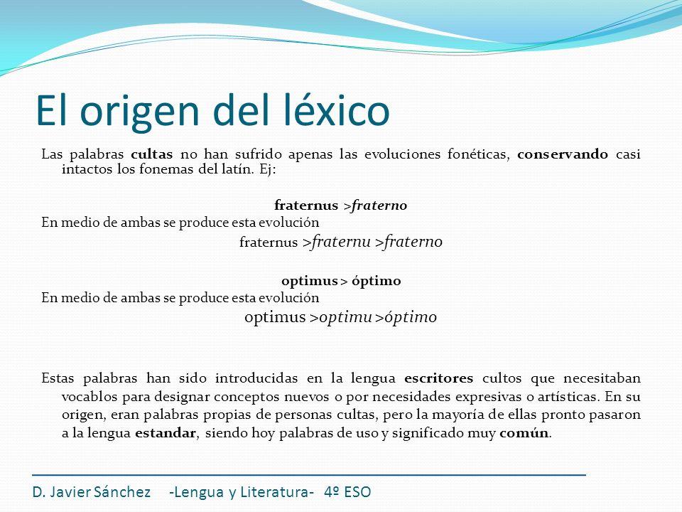 El origen del léxico Las palabras cultas no han sufrido apenas las evoluciones fonéticas, conservando casi intactos los fonemas del latín. Ej: fratern