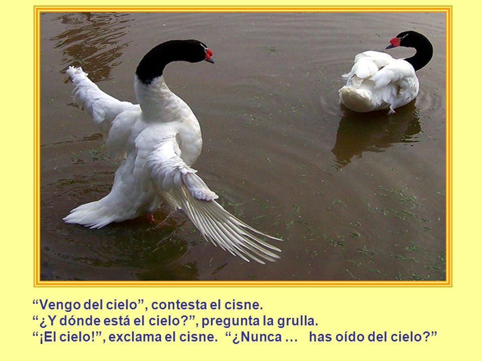 Vengo del cielo, contesta el cisne. ¿Y dónde está el cielo?, pregunta la grulla. ¡El cielo!, exclama el cisne. ¿Nunca … has oído del cielo?