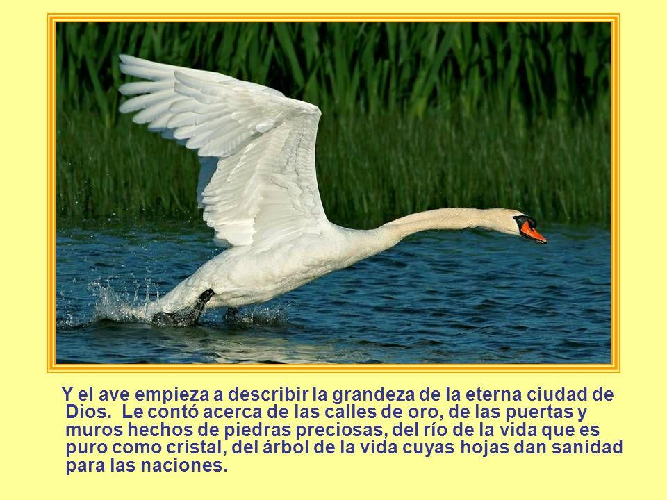 Y el ave empieza a describir la grandeza de la eterna ciudad de Dios. Le contó acerca de las calles de oro, de las puertas y muros hechos de piedras p