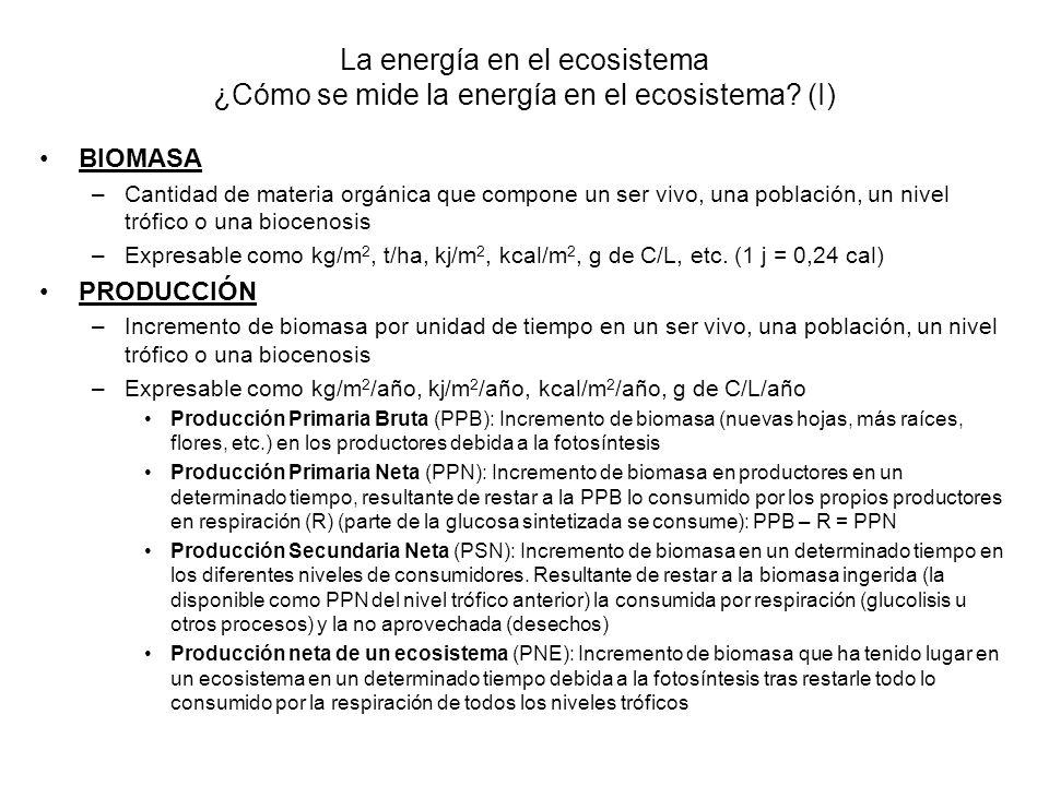 La energía en el ecosistema ¿Cómo se mide la energía en el ecosistema? (I) BIOMASA –Cantidad de materia orgánica que compone un ser vivo, una població
