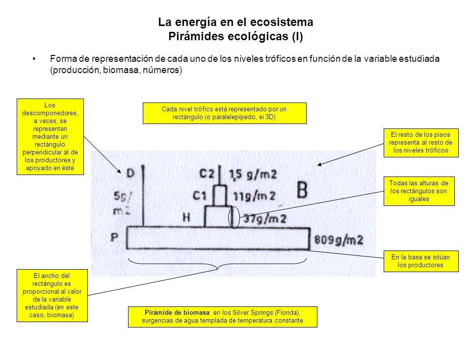 La energía en el ecosistema Pirámides ecológicas (I) Forma de representación de cada uno de los niveles tróficos en función de la variable estudiada (
