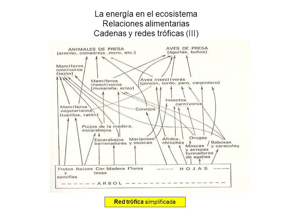 La energía en el ecosistema Transferencia de energía en una cadena trófica Pérdidas por calor en respiración Energía química (glucosa) 1% de energía luminosa Incremento biomasa aprovechable por herbívoros (10%) Energía luminosa Restos no aprovechables por el nivel trófico siguiente