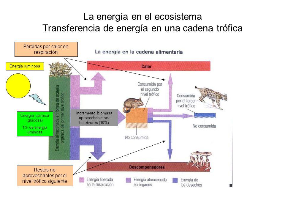 La energía en el ecosistema Flujo de materia y energía en el ecosistema (I) 10% Flujo de materia: cerrado Flujo de energía: abierto Pérdida de energía Humus edáfico Na, K, Mg, Ca, Sulfatos, nitratos, fosfatos