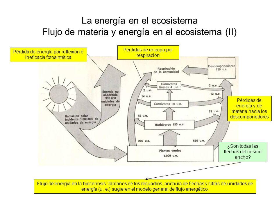 La energía en el ecosistema Flujo de materia y energía en el ecosistema (III) Flujo de energía en Silver Springs, Florida, en Kcal/m 2 /año Pérdidas debidas a la respiración de autótrofos y heterótrofos en forma de calor