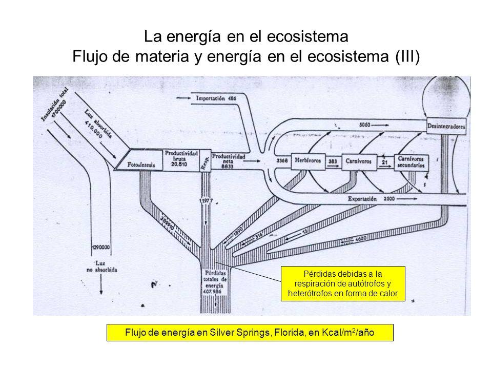 La energía en el ecosistema Flujo de materia y energía en el ecosistema (III) Flujo de energía en Silver Springs, Florida, en Kcal/m 2 /año Pérdidas d