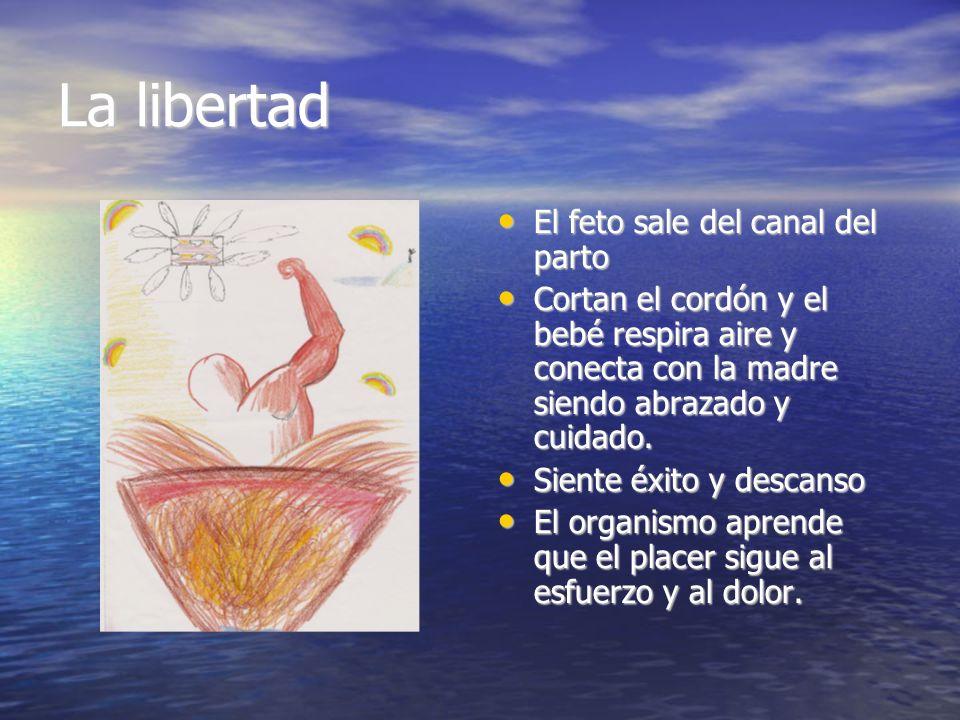 La libertad El feto sale del canal del parto El feto sale del canal del parto Cortan el cordón y el bebé respira aire y conecta con la madre siendo ab