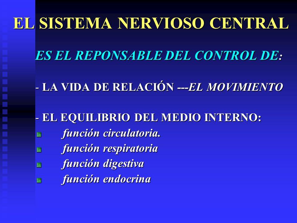 EL SISTEMA NERVIOSO CENTRAL ES EL REPONSABLE DEL CONTROL DE : - LA VIDA DE RELACIÓN ---EL MOVIMIENTO - EL EQUILIBRIO DEL MEDIO INTERNO: función circul