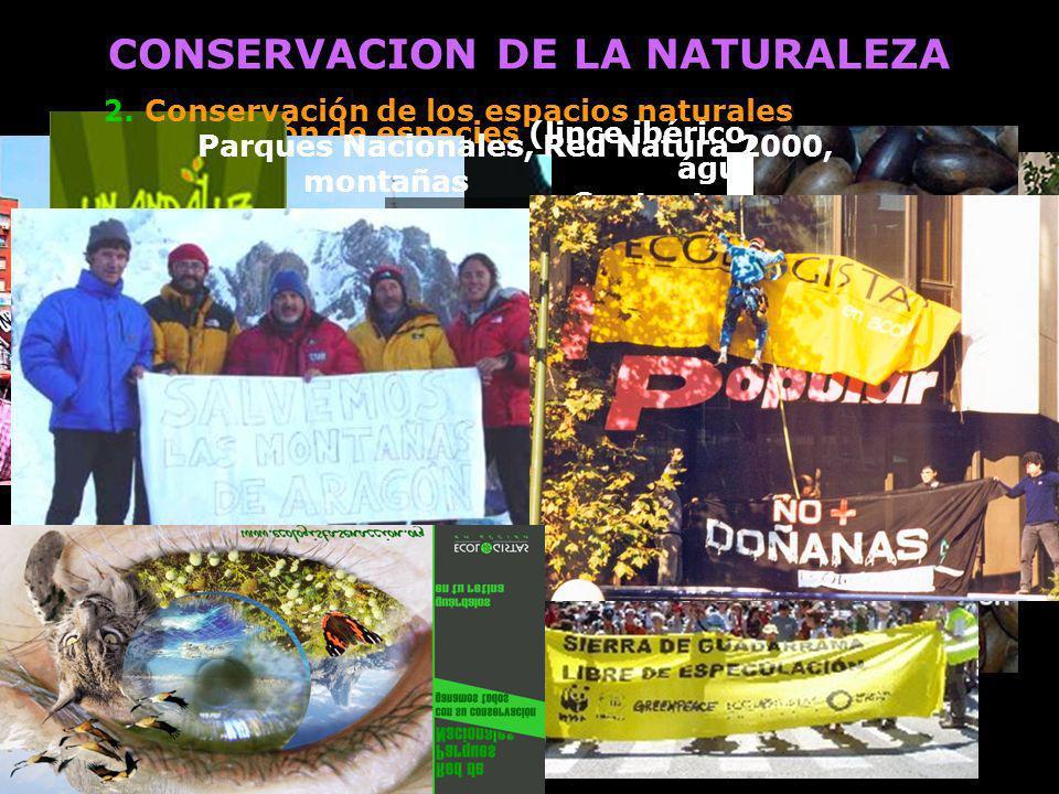 CONSERVACION DE LA NATURALEZA 1. Conservación de especies (lince ibérico, oso, águila imperial...) Contra tendidos eléctricos, caza 4. Defensa de los