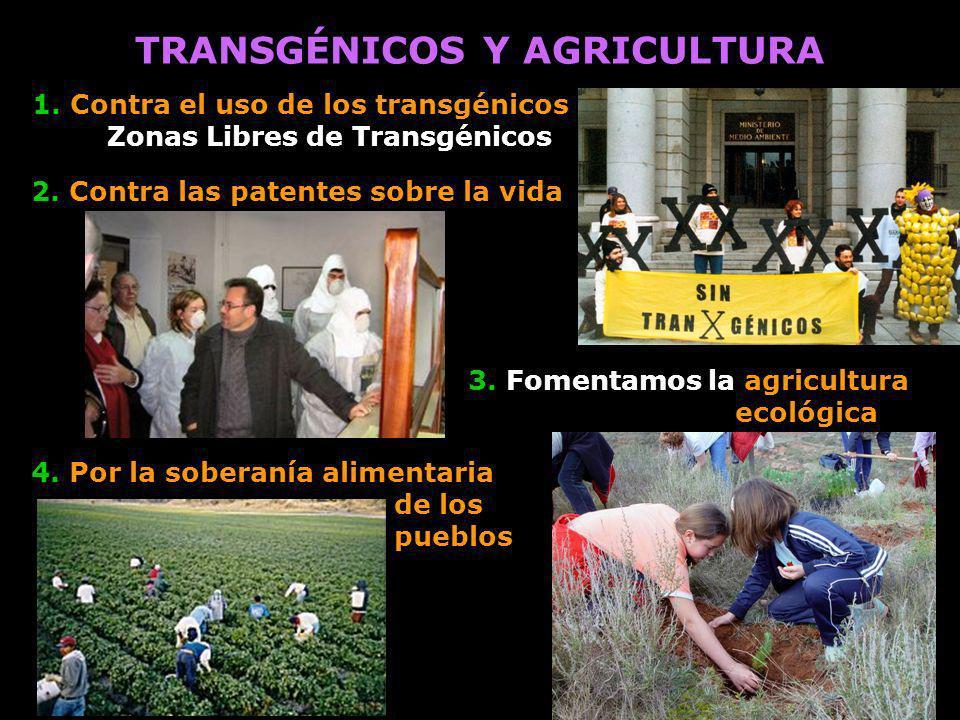 3. Fomentamos la agricultura ecológica TRANSGÉNICOS Y AGRICULTURA 2. Contra las patentes sobre la vida 4. Por la soberanía alimentaria de los pueblos