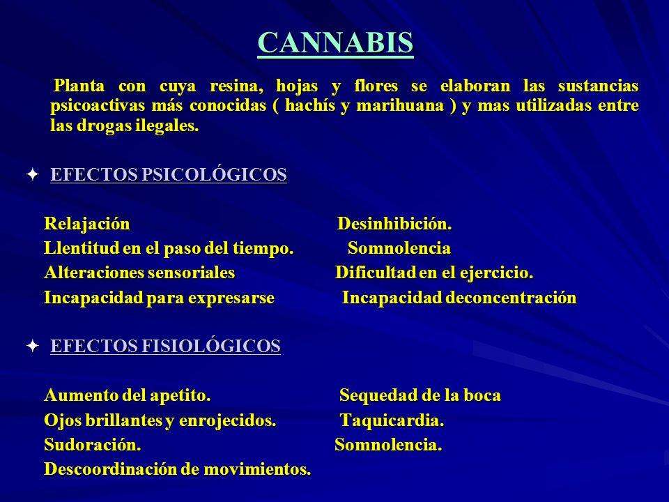 CANNABIS Planta con cuya resina, hojas y flores se elaboran las sustancias psicoactivas más conocidas ( hachís y marihuana ) y mas utilizadas entre la