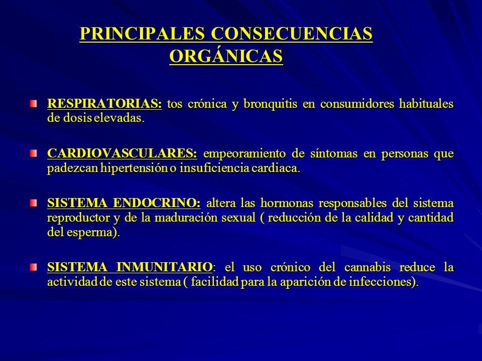 PRINCIPALES CONSECUENCIAS ORGÁNICAS RESPIRATORIAS: tos crónica y bronquitis en consumidores habituales de dosis elevadas. CARDIOVASCULARES: empeoramie