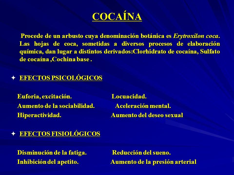 COCAÍNA Procede de un arbusto cuya denominación botánica es Erytroxilon coca. Las hojas de coca, sometidas a diversos procesos de elaboración química,