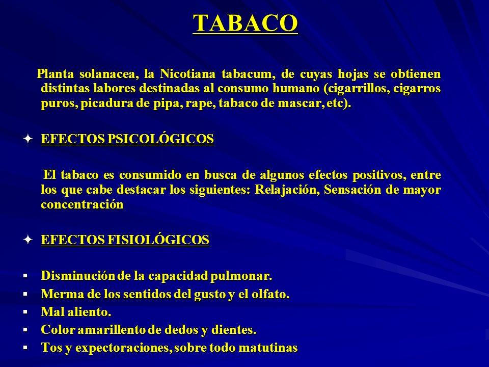 TABACO Planta solanacea, la Nicotiana tabacum, de cuyas hojas se obtienen distintas labores destinadas al consumo humano (cigarrillos, cigarros puros,