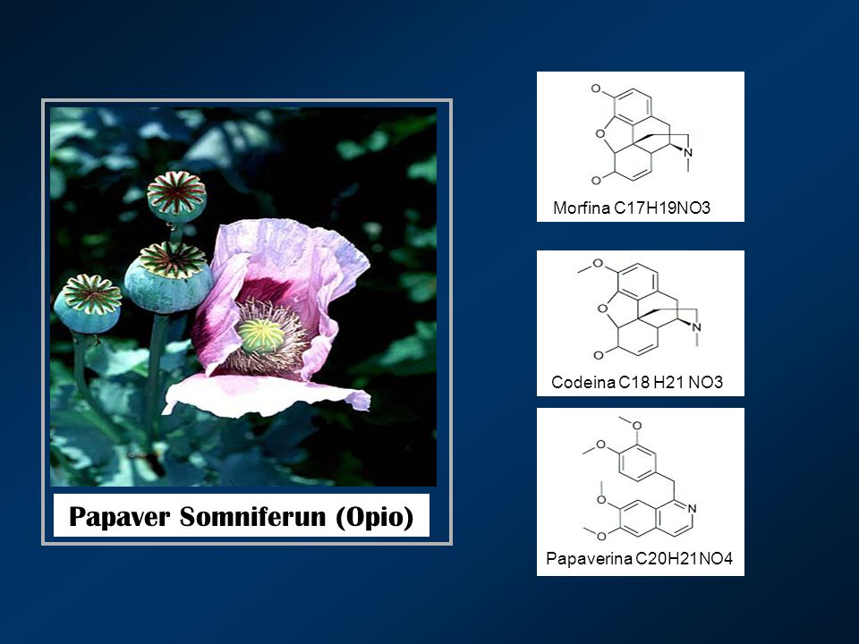 Papaver Somniferun (Opio) Morfina C17H19NO3 Codeina C18 H21 NO3 Papaverina C20H21NO4