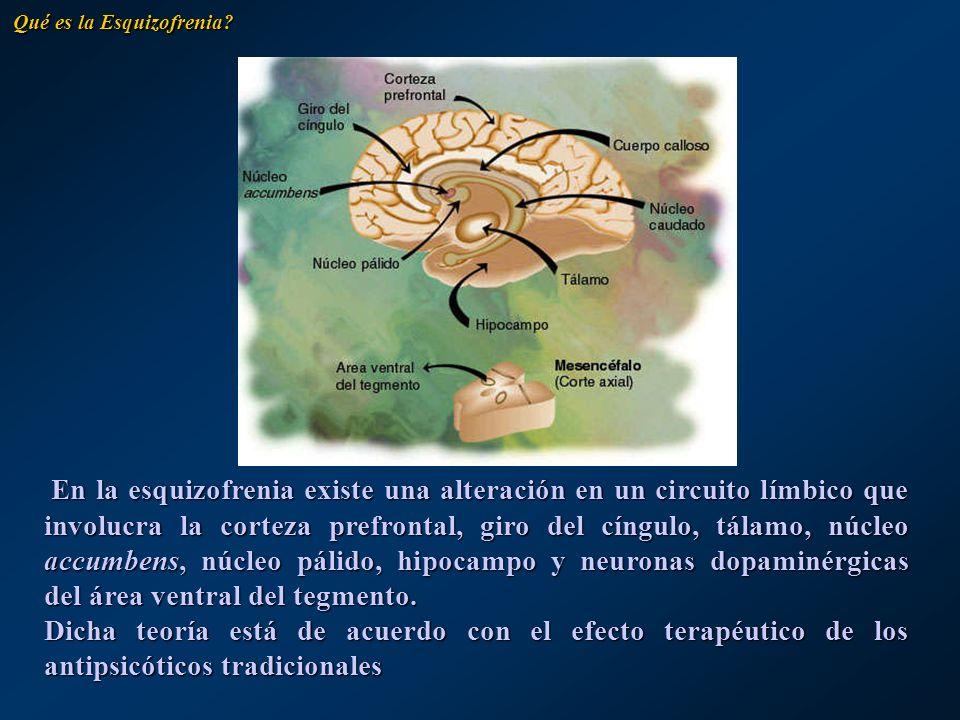 En la esquizofrenia existe una alteración en un circuito límbico que involucra la corteza prefrontal, giro del cíngulo, tálamo, núcleo accumbens, núcl