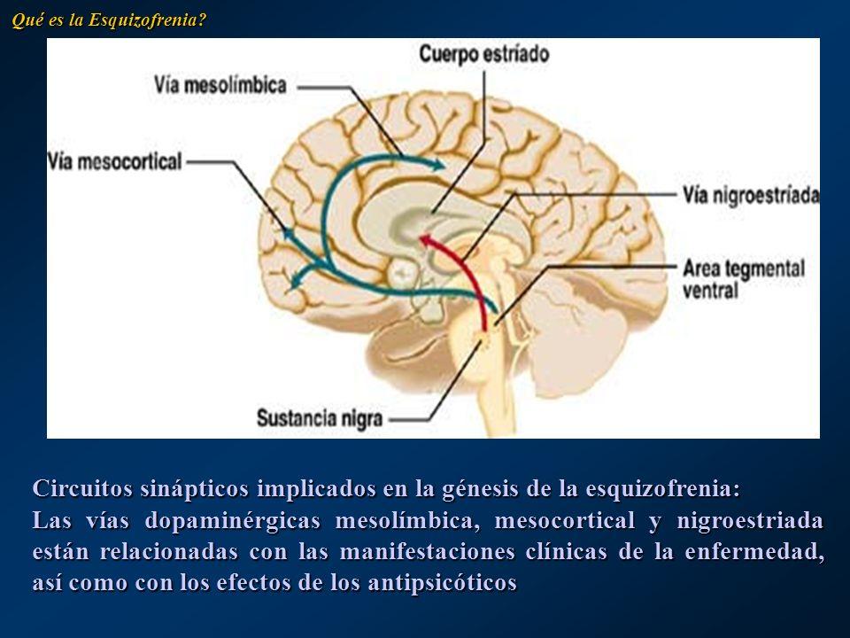 Circuitos sinápticos implicados en la génesis de la esquizofrenia: Las vías dopaminérgicas mesolímbica, mesocortical y nigroestriada están relacionada