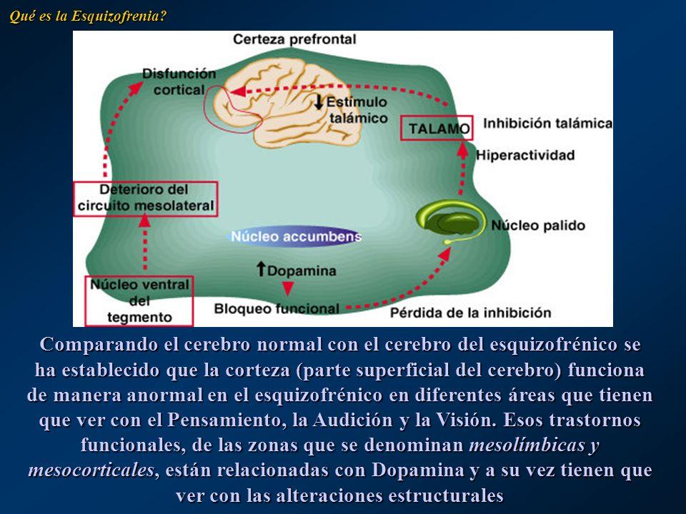 Comparando el cerebro normal con el cerebro del esquizofrénico se ha establecido que la corteza (parte superficial del cerebro) funciona de manera ano