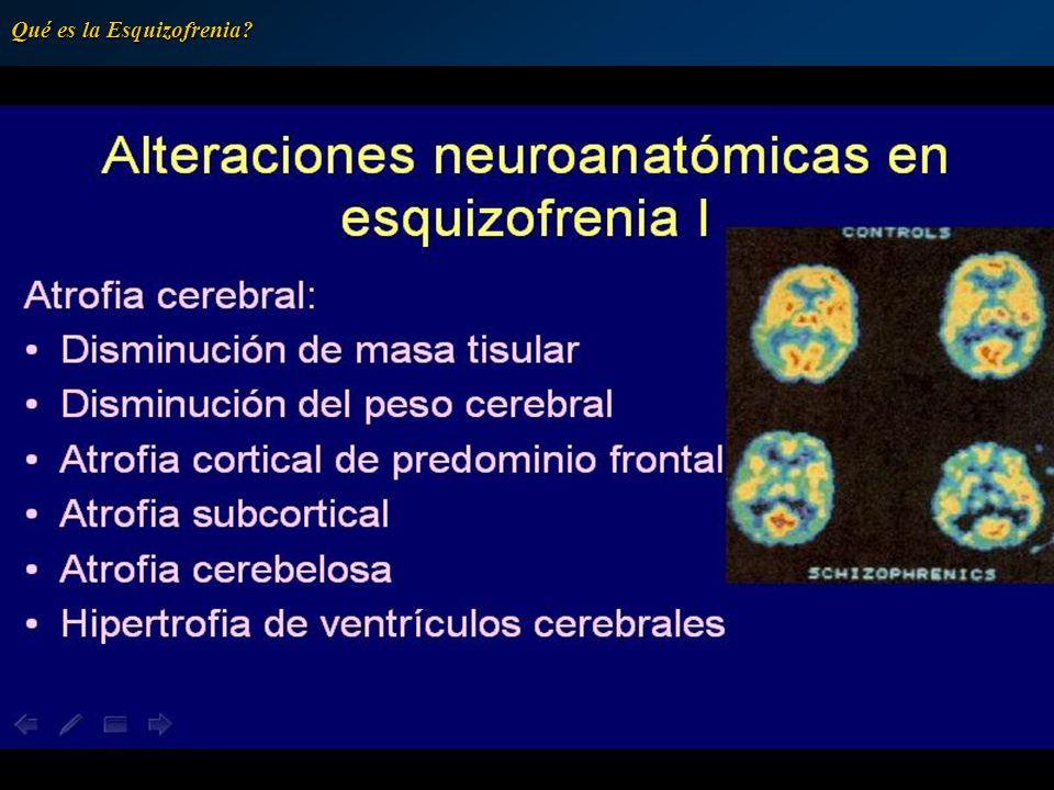 Receptores dopaminérgicos Los receptores presinápticos Los receptores presinápticos (autorreceptores somatodendríticos y terminales) están encargados de controlar la liberación de dopamina, mientras que los liberación de dopamina, mientras que los postsinápticos son los responsables de la acción biológica del neurotransmisor acción biológica del neurotransmisor Qué es la Esquizofrenia?