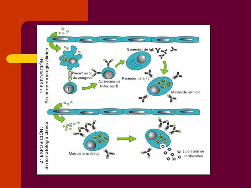 Cambios fisiopatológicos de la reacción anafiláctica y anafilactoide.