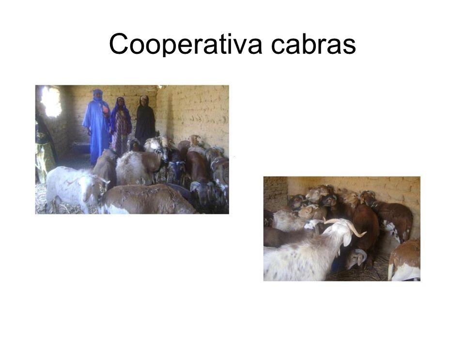 Cooperativa cabras